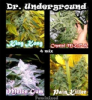 Dr Underground Killer Mix Feminised 4 Seeds